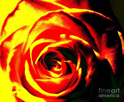 Photograph - Flaming Rose by Tammy Herrin