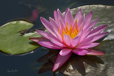 Flaming Waterlily Art Print