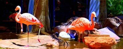 Flamingo Hotel Wall Art - Photograph - Flamingo 3 by Randall Weidner