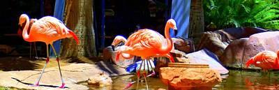 Flamingo Hotel Wall Art - Photograph - Flamingo 4 by Randall Weidner
