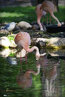 Photograph - Flamingo by Edward Kovalsky