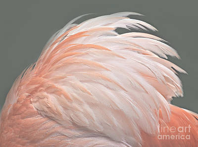 Photograph - Flamingo Feather Details by Susan Candelario