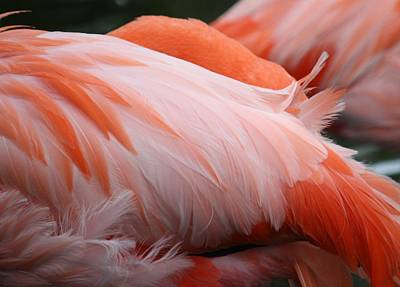 Flamingo Feathers Art Print by Andrea  OConnell