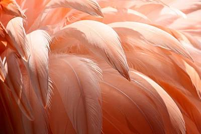Flamingo Feathers Art Print by Paulette Thomas