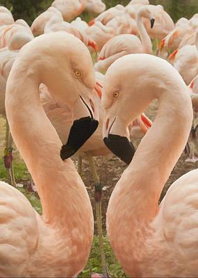 Digital Art - Flamingo Heart by Sharon Foster