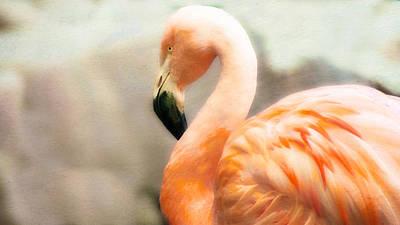 Kathryn Photograph - Flamingo  by Kathryn Potempski