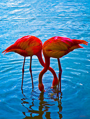Photograph - Flamingo Love by Jeff Adkins