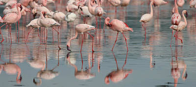 Photograph - Flamingo Parade by Joseph G Holland