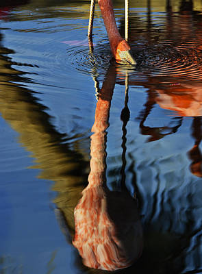 Photograph - Flamingo Reflections 2 by Dave Dilli