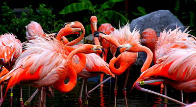 Angry Birds Photograph - Flamingo Wars by Kenneth Mucke