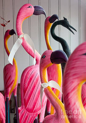 Photograph - Flamingoes by Susan Cole Kelly