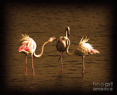 Photograph - Flamingos Argue by Radoslav Nedelchev
