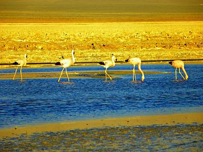 Photograph - Flamingos At Atacama Desert by Sandra Lira