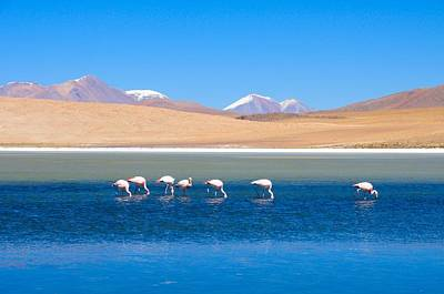 Flamingos At Lake Art Print