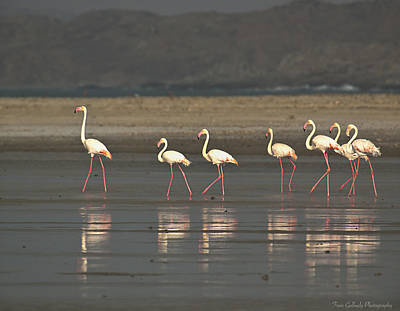 Photograph - Flamingos by Fran Gallogly