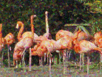 Flamingo's Art Print by Fred Whalley