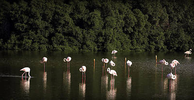 Photograph - Flamingos In The Lake by Radoslav Nedelchev