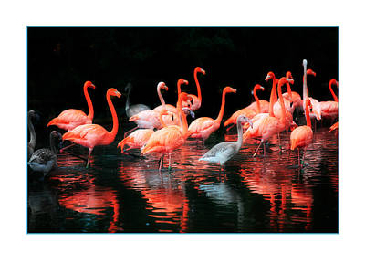 Pink Flamingo Nature Photograph - Flamingos by Mal Bray