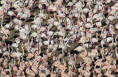 Flamingos Print by Original Artworks by Grooveworks (Flickr name - jules_art)