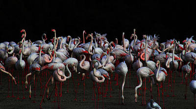Photograph - Flamingos by Radoslav Nedelchev