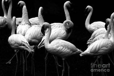Wings Domain Photograph - Flamingos by Wingsdomain Art and Photography