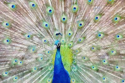 Zoo Mixed Media - Flaunting by Angelina Vick