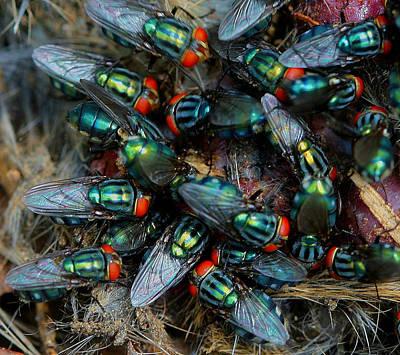 Digital Art - Flies Gone Wild by Carrie OBrien Sibley