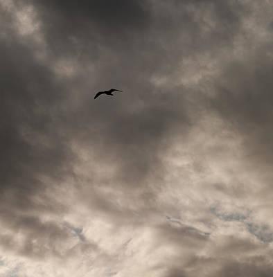 Photograph - Flight Into Darkness by Odille Esmonde-Morgan