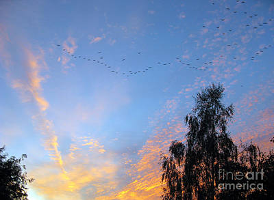 Photograph - Flight Into The Sunset by Ausra Huntington nee Paulauskaite