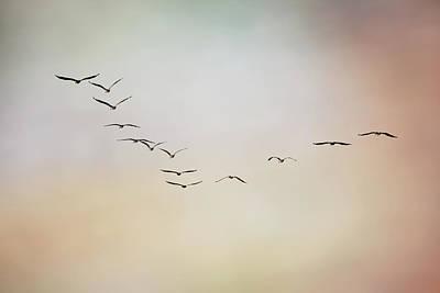 Of Birds Photograph - Flight Of Pelicans by Daniela Duncan
