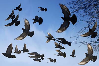 Photograph - Flight Of Pigeons by Diana Haronis