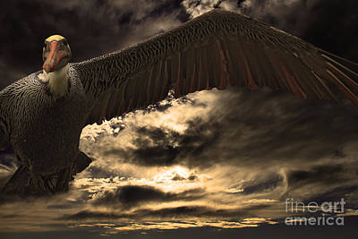 Photograph - Flight Of The Brown Pelican by Wingsdomain Art and Photography