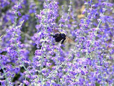 Flight Of The Bumble Bee Art Print by Rhiannon Hamm