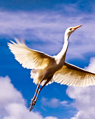 Photograph - Flight Of The Egret by Daniel Marcion