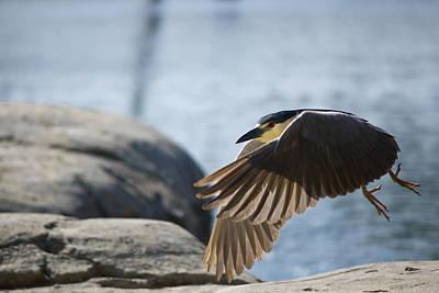Flight Of The Heron Original by Rob Nelms