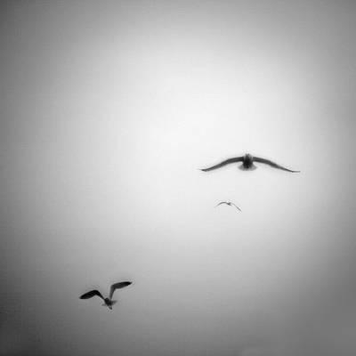Flight Print by Peter Gnas