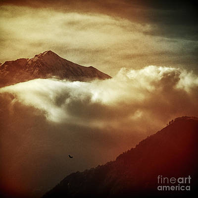 Photograph - Flight by Silvia Ganora