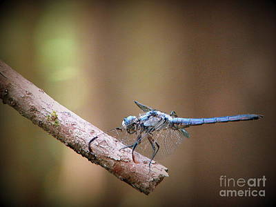Photograph - Flit by Priscilla Richardson