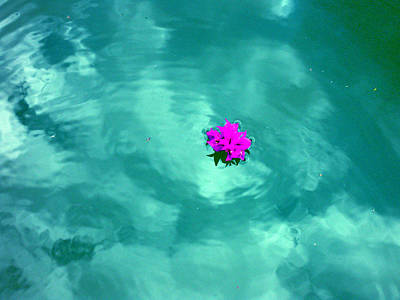 Photograph - Floating Colors by Sarah Hornsby