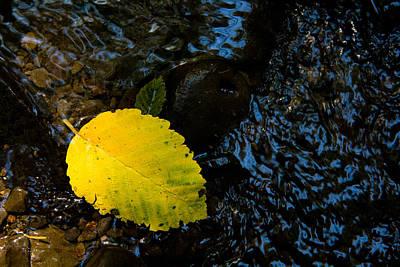 Floating Down The River Art Print by Sheri Van Wert