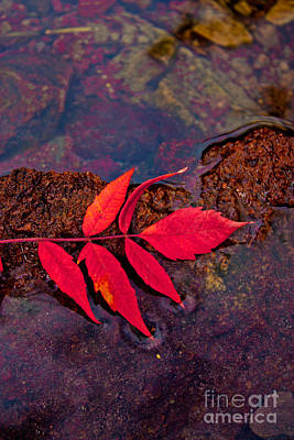 Floating Fall Sumac Art Print