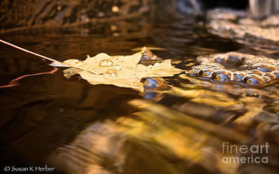 Photograph - Floating Gold by Susan Herber