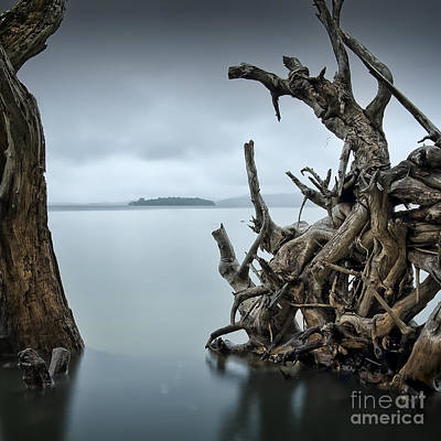 Water Filter Photograph - Floating Island by Michael Howard
