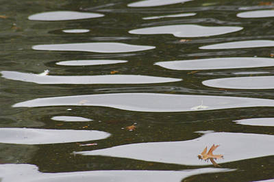 Photograph - Floating Leaf by Marilyn Wilson