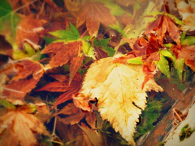 Photograph - Floating Leaves by Cindy Wright