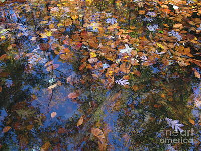 Photograph - Floating Leaves  by Nancy Patterson