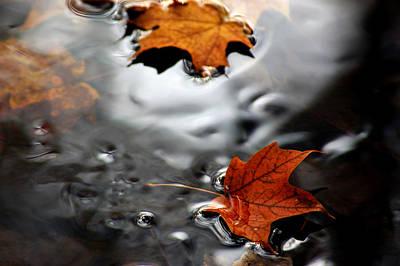 Floating Maple Leaves Art Print by LeeAnn McLaneGoetz McLaneGoetzStudioLLCcom