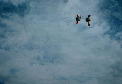 Photograph - Floating On Dreams by Emily Stauring