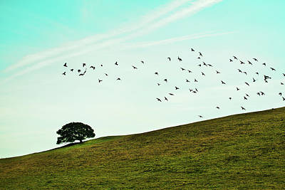 Flock Of Birds Art Print by Where Photography meets Graphic Design.