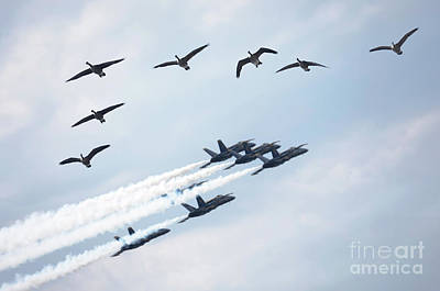 Flight Formation Photograph - Flock Of Canada Geese At Air Show by Oleksiy Maksymenko